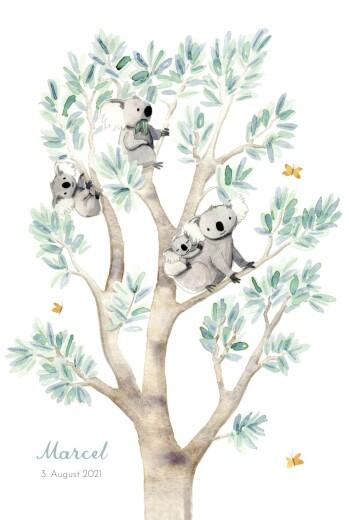 Geburtskarten 4 koalas weiß