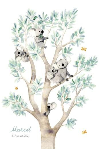 Geburtskarten 6 koalas weiß